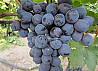 vind poama MOLDOVA / продаю виноград МОЛДОВА